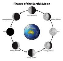 Phasen des Mondes vektor