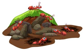 Grupp av myror som bor under jord