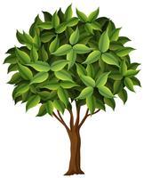 Ein Naturbaum auf weißem Hintergrund vektor