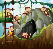 Scen med apor som spelar i grottan vektor