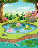 Grodor och fiskar i dammen