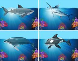 Haie und Wale im Ozean vektor