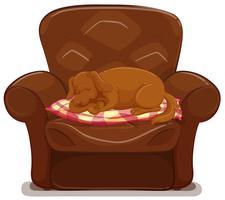 Liten hund sover på brun soffa