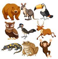 Set verschiedene Tiere vektor
