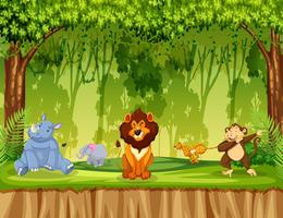 Djur i djungelscenen vektor