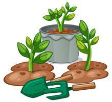 Pflanzen und Gartengeräte