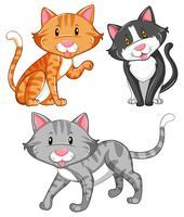 Katt med olika pälsfärger