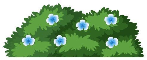 Getrennter Blumenbusch auf weißem Hintergrund vektor