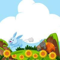Kanin och sköldpadda går i fältet