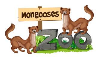 Mongooses står på zoo tecken vektor