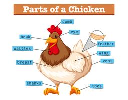 Diagramm, das Teile des Huhns zeigt