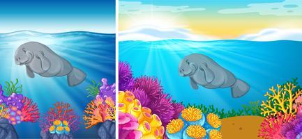 Szene zwei des Manatisschwimmens unter dem Meer vektor