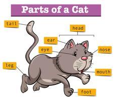 Diagram som visar delar av katten vektor