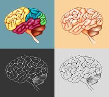 Menschliches Gehirn in vier Ausführungen vektor