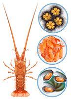 Vier Arten von Meeresfrüchten auf Teller vektor