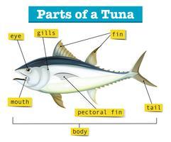 Diagramm, das verschiedene Teile des Thunfischs zeigt