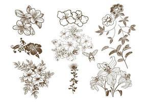 Hand gezeichnetes Blumenvektor-Satz