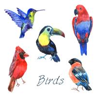 Exotiska tropiska fåglar vattenfärg ikoner uppsättning