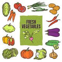 Gemüseskizze Set vektor