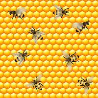 Nahtloses Muster der Honigbiene vektor