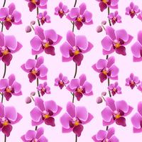 Orchid blomma sömlöst mönster vektor