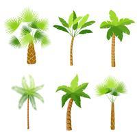 Dekorativa palmer träd ikoner uppsättning