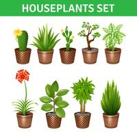 Houseplants realistische Icons Set