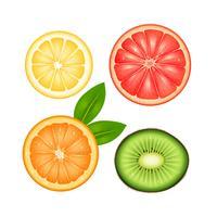 Frukt Top Set vektor