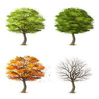 Träd i fyra årstider vektor