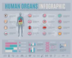 Mänskliga organens infografiska uppsättning vektor