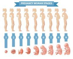 Graviditet Kvinna Stages Vektor Illustration