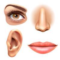 Augenohr Lippen Nase Icons Set vektor