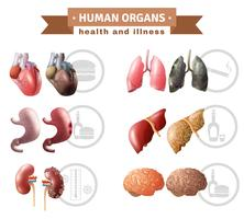 Human Organ Heath Risker Medical Poster vektor