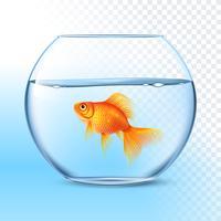 Goldfisch im realistischen Bild der Wasserschüssel