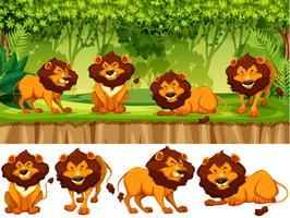 lejon i det vilda vektor