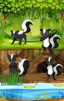 Vier Stinktiere im Dschungel vektor