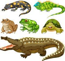 Set av reptil djur vektor