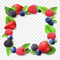 Berry Frame Transparente Abbildung vektor
