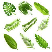 Tropische Palmenzweige vektor