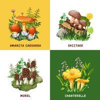 Konzept der wilden Pilze 2x2
