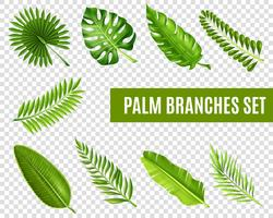palm grenar uppsättning vektor