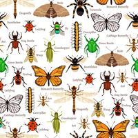 Insekter Sömlös Mönster vektor