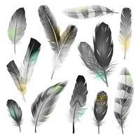 Svartvita Fjädrar Set vektor