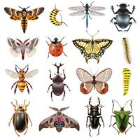 Insekter Icons Set