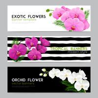 Blommande orkidéer Realistiska banderoller Set vektor