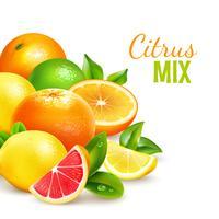 Citrusfrukter Mix Realistisk Bakgrundsaffisch