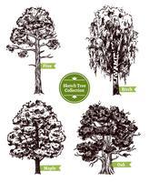 skiss skiss träd
