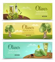 Olive Banner eingestellt vektor