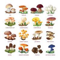 Sammlung von essbaren Pilzen und Fliegenpilzen
