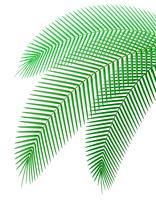 Palmzweig-Vektor-Illustration